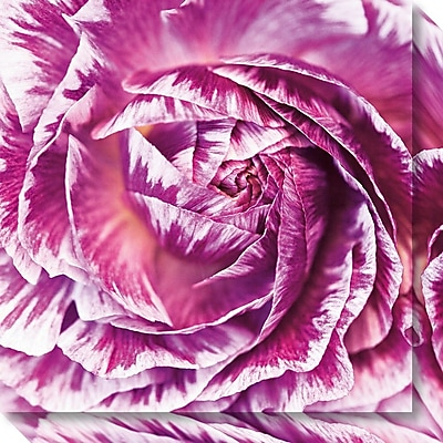 Amanti Art Canvas Art Gallery Wrap Ranunculus Abstract IV Color by Laura Marshall 20