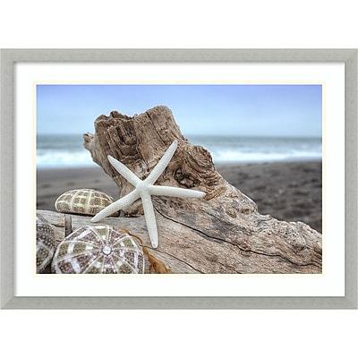 Amanti Art Framed Art Print Rodeo Beach Shells 6 by Alan Blaustein 29