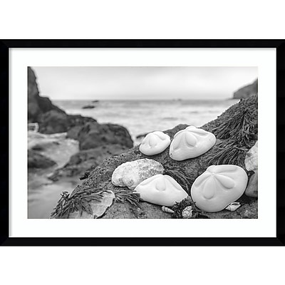 """""Amanti Art""""""""H,, Framed Art Print Rodeo Beach Shells 4 by Alan Blaustein 29"""""""" x 21""""""""H, Frame Satin Black (DSW3894379)"""""" 24010895"