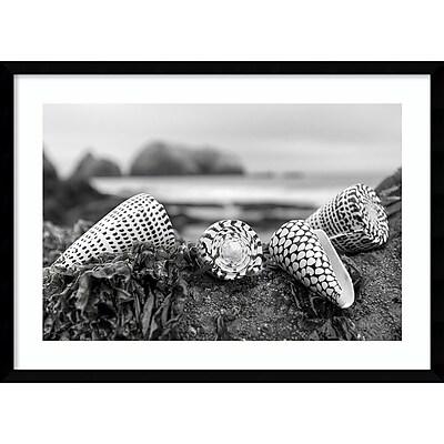 Amanti Art Framed Art Print Rodeo Beach Shells 3 by Alan Blaustein 29