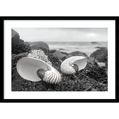 Amanti Art Framed Art Print Rodeo Beach Shells 2 by Alan Blaustein 29