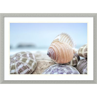 Amanti Art Framed Art Print Rodeo Beach Shells 15 by Alan Blaustein 29