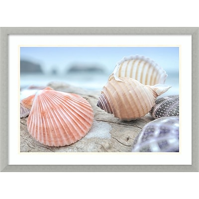Amanti Art Framed Art Print Rodeo Beach Shells 10 by Alan Blaustein 29