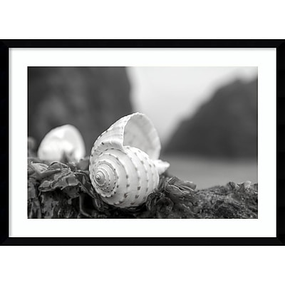 """""Amanti Art Framed Art Print Rodeo Beach Shells 1 by Alan Blaustein 29"""""""" x 21""""""""H, Frame Satin Black (DSW3894387)"""""" 24010989"