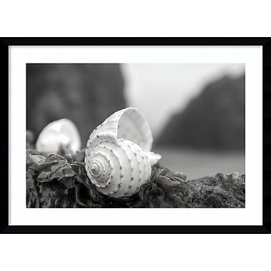 Amanti Art Framed Art Print Rodeo Beach Shells 1 by Alan Blaustein 29