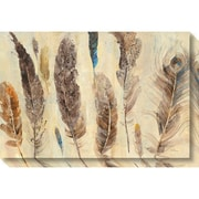 "Amanti Art Canvas Art Gallery Wrap Feather Study by Albena Hristova 30""W x 20""H, (DSW3904508)"