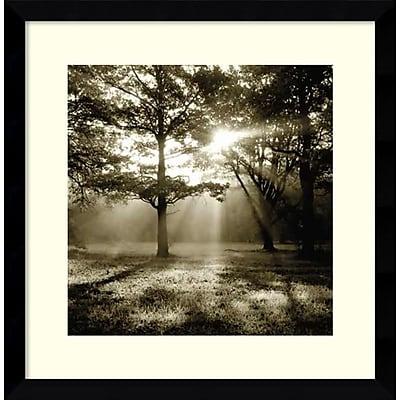 Amanti Art Framed Art Print Wild Forest by Steven Mitchell 17