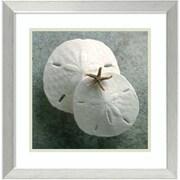 "Amanti Art Framed Art Print Sand Dollars by Glen & Gayle Wans 18""W x 18""H Frame Brushed Steel (DSW3908963)"