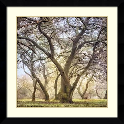 Amanti Art Framed Art Print Golden Dawn by Dianne Poinski 33