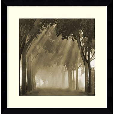Amanti Art Framed Art Print Misty Grove by Steven Mitchell 17
