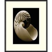 "Amanti Art Framed Art Print  Nautilus by Sondra Wampler 11""W x 14""H, Frame Matte Black  (DSW3909025)"