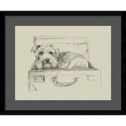 "Amanti Art Framed Art Print Stowaway I (Dog) by Ethan Harper 23""W x 19""H, Satin Black (DSW3909199)"