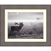 "Amanti Art Framed Art Print Morning Call (Elk) by Joe Reynolds 34""W x 28""H Frame Rustic Gray (DSW3909231)"
