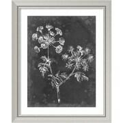 "Amanti Art Framed Art Print Slate Floral I by Ethan Harper 26""W x 32""H, Frame Silver (DSW3909233)"