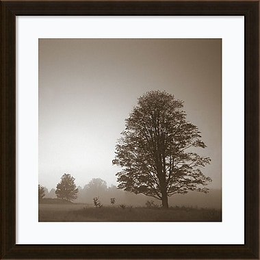 Amanti Art Framed Art Print In180 1 Treeby Photo INC Studio 22