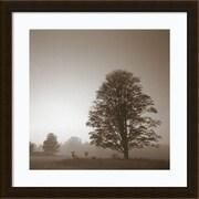 """Amanti Art Framed Art Print In180 1 Treeby Photo INC Studio 22"""" x 22""""H, Frame Espresso  (DSW3909517)"""