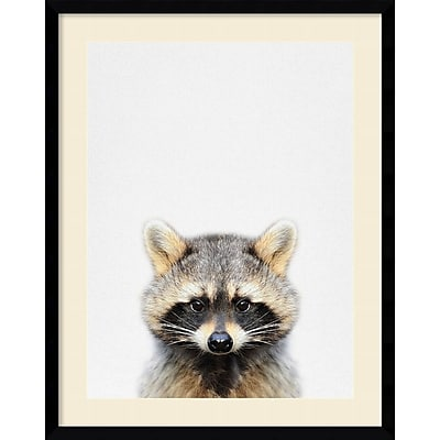 """""Amanti Art Framed Art Print Raccoon by Tai Prints 23""""""""W x 29""""""""H Frame Satin Black (DSW3909530)"""""" 24011080"