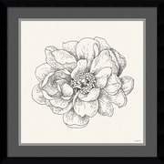 "Amanti Art Framed Art Print Pen and Ink Florals IV by Danhui Nai 21""W x 21""H, Frame Satin Black (DSW3909581)"