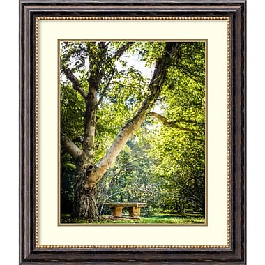 Amanti Art Framed Art Print 'A Place to Ponder Tree by Matt Marten 25