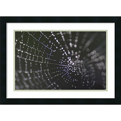 "Amanti Art Framed Art Print Kaleidoscope (Spider Web) by John Cioci 26""W x 19""H Frame Satin Black (DSW3910638)"