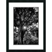 Amanti Art Framed Art Print Red Rock Sunrise by Matt Marten 22 x 29 Frame Satin Black  (DSW3910639)