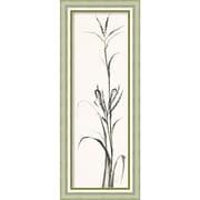 "Amanti Art Framed Art Print Gray Grasses IV by Chris Paschke 18""W x 45""H Silver Frame (DSW3926485)"