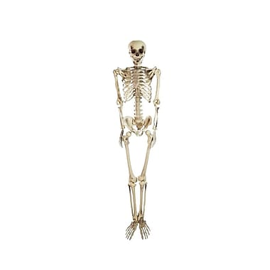 Northlight 5' Spooky Life Size Skeleton Indoor/Outdoor Halloween Decoration (32256596)
