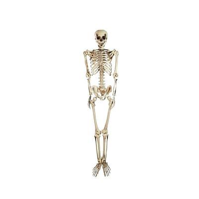 Northlight 5' Spooky Life Size Skeleton Indoor/Outdoor Halloween Decoration (32256596)