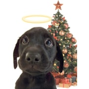 RSVP Lab Pup with Christmas Tree Boxed Holiday Cards (SCCB1491)