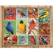 Springbok Puzzles Songbirds 1000 Piece Jigsaw Puzzle (33-10749)