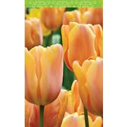 Springbok Puzzles Spring Tulips Bridge Tally Sheets Playing Cards Accessory (91-64027)