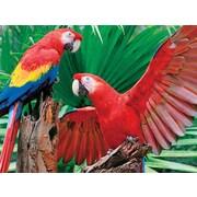 Springbok Puzzles Scarlet Macaw 400 Piece Jigsaw Puzzle (33-70541)