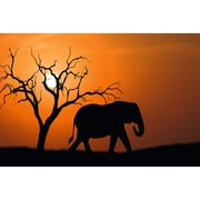"Paperflow Decorative Picture, African Elephant, 25.59""H x 38.58"" (PHT07C)"
