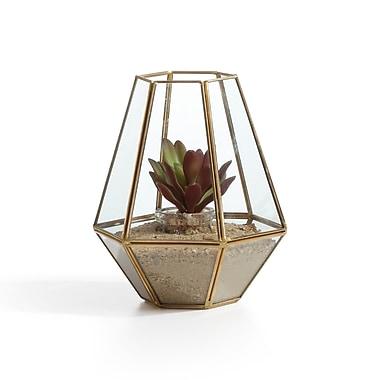Danya B Diamond Shape Brass and Glass Terrarium (EK022)