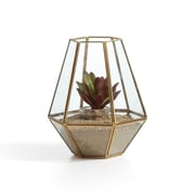 Danya B. Diamond Shape Brass and Glass Terrarium (EK022)