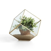 "Danya B. 7"" Cube Brass and Glass Terrarium (EK0312)"
