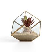 "Danya B. 9.5"" Cube Brass and Glass Terrarium (EK0314)"