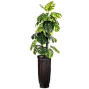 "Laura Ashley 93"" Tall Indoor/Outdoor Monstera Ceriman in Fiberstone Planter (VHX126214)"