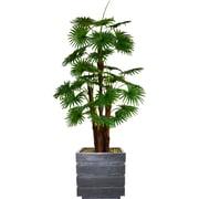 "Vintage Home 72"" Tall Fan Palm Tree, Burlap Kit and Fiberstone Planter (VHX129204)"