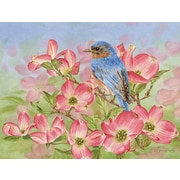 LANG BLUEBIRD OF HAPPINESS BOXED NOTE CARDS (1005365)