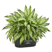 Nearly Natural Aglonema Artificial Plant in Wood Planter (6463)
