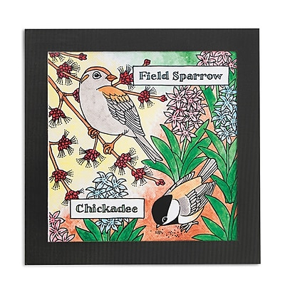 S&S Worldwide, Bird Watcher Portraits Pk24, (GP3233)