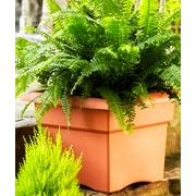 "Bloem Veranda Deck Box Planter, 14"", Terra Cotta (57014C)"