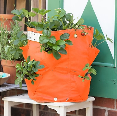 BloemBagz Strawberry Planter Grow Bag, 9 Gallon, Tequila Sunrise (SBP-20)