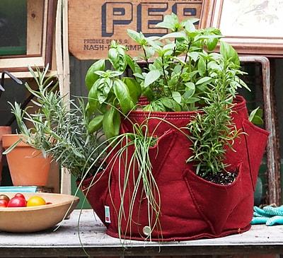 BloemBagz Big Herb Planter Grow Bag, 5 Gallon, Union Red (BHP-12)
