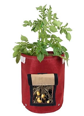 BloemBagz Potato Vegetable Planter Grow Bag, 9 Gallon, Union Red (POP-12)