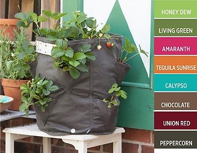 BloemBagz Strawberry Planter Grow Bag, 9 Gallon, Chocolate (SBP-45)