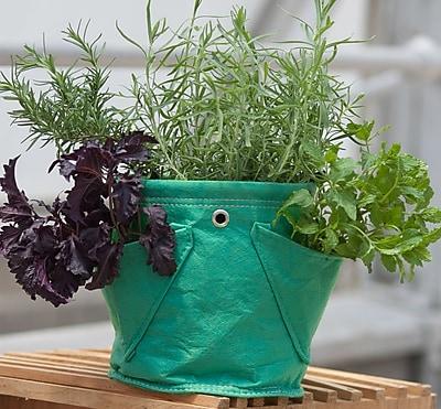 BloemBagz Mini Herb Hanging Planter Grow Bag, 1.5 Gallon, Calypso (MHP-27)