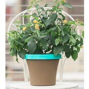 "Bloem Terra Two-Tone Planter, 12"", Chocolate with Calypso (TT1245-27)"
