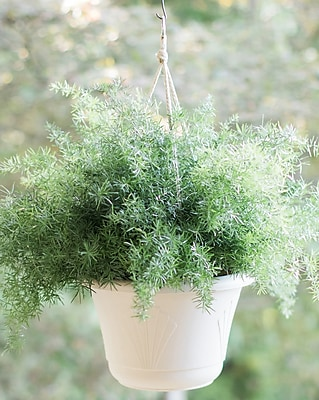 Bloem Lucca Self Watering Hanging Basket 13 Taupe Lhb1335 Staples